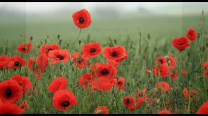 Remembrance Day Parade 10th November